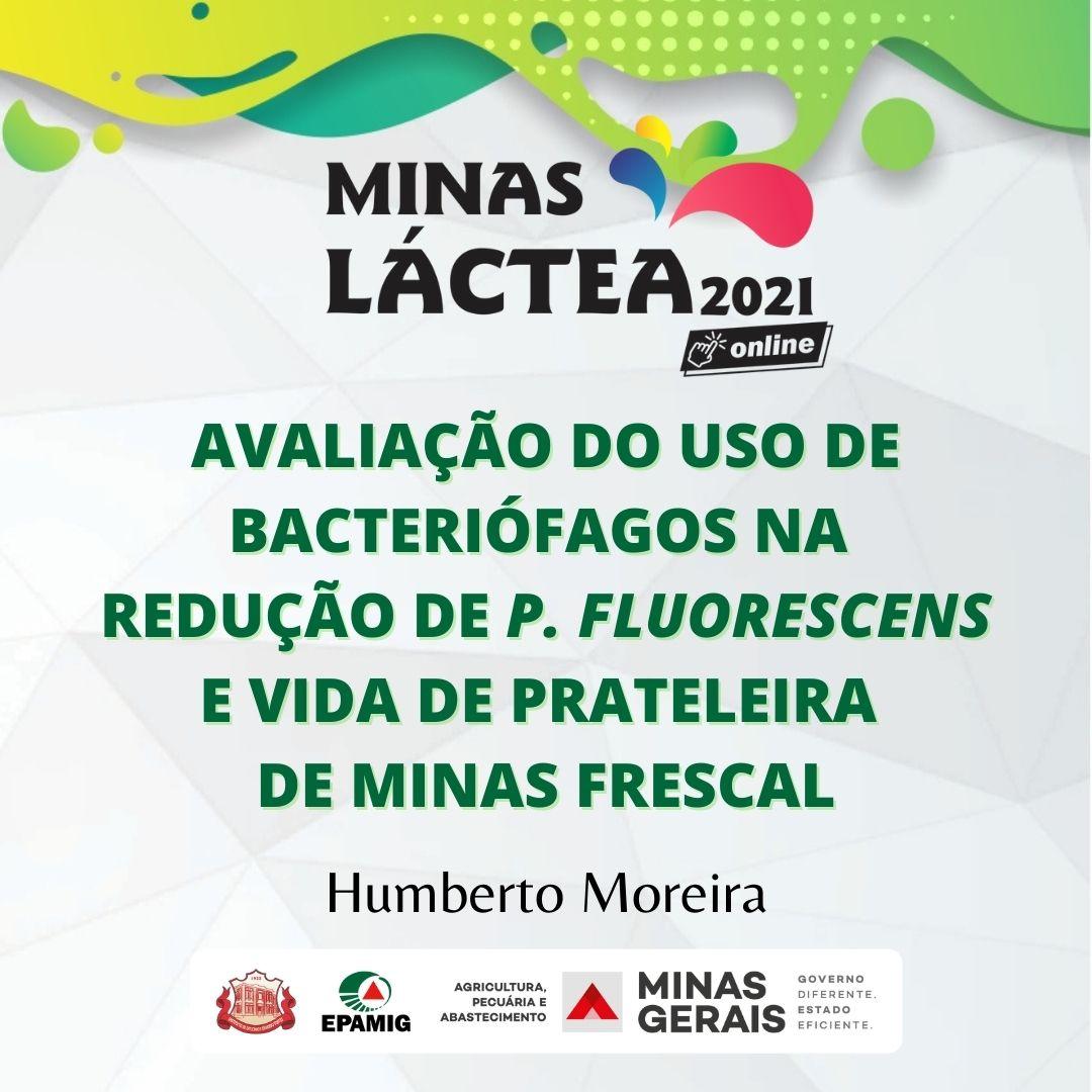Avaliação do uso de bacteriófagos na redução de P. fluorescens e vida de prateleira de Minas Frescal